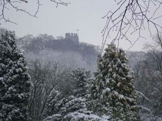Dudley Castle, spring 2013 by Joanne Williamson
