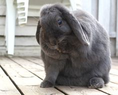 Bunny Takes a Break for a Little Wash - August 26, 2011