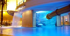 Awesome shark tank swimming pool in vegas. Learned this existed on my flight HOME from vegas. Amazing Swimming Pools, Awesome Pools, Vegas Pools, Dream Pools, Seven Wonders, Shark Tank, Water Slides, Cool Pictures, Las Vegas Hotels