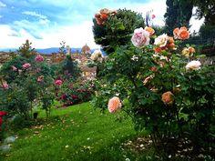 rose-garden.jpg (1140×855)