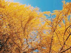 Beautiful Nami Island in South Korea Nami Island, Jeju Island, Seoul Korea Travel, Autumn In Korea, Yellow Tree, Hidden Beach, Tree Photography, Photo Essay, Fall Photos