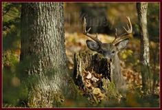 5 oddball hiding spots for late season bucks.  I have seen number 5 play out.    www.usatrophyhunts.com