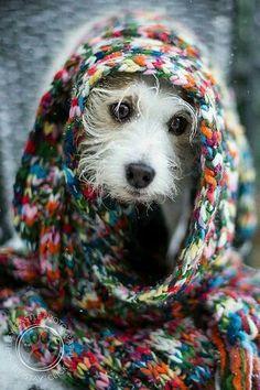 Vagabond-Dogs.com