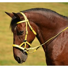 SIDEPULL Bitless Bridle made from BETA BIOTHANE (Solid Colored ...