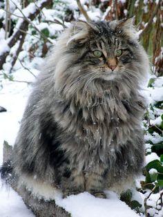 Alle Katzen-Fans dürften sich in den nächsten Minuten mehrfach verlieben! :D Diese 20 Katzen sind nämlich so süß und knuffig, dass man sie alle am...