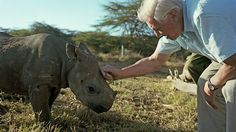 Sir David with a three-month-old black rhino. This calf is sadly blinded by cataracts. #africa #thisisafrica #bbc #rhino #moving