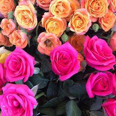 """6 Beğenme, 2 Yorum - Instagram'da Nesrincik (@nesrin_kefeli): """"#fotoselect #makro #macro #doğa #nature #güller #roses #cicekler #flowers #flowerstagram…"""""""