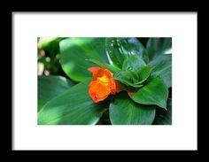 orange costus, orange, flower, macro, nature, michiale schneider photography