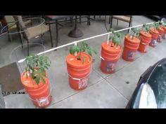 Whizbang Bucket Irrigation For Gardeners - YouTube