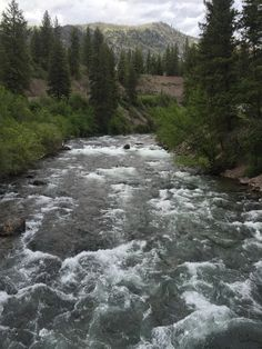 River by our camp. Fish Creek MT