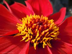 Flowers macro close up by Stephen Taylor Photography