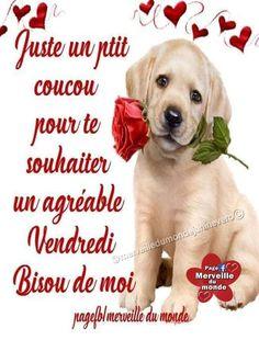 Happy Friendship Day, Labrador Retriever, Animals, Flowers Gif, Midi, Recherche Google, Frases, Places, Friday Images