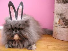 Fifi, Brett Bara's cat, was not pleased to be dressed up for Easter.