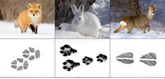 Cicely Mary Barker, Animal Tracks, Toddler Learning, Kids Decor, Kindergarten, Preschool, Survival, Snoopy, Animals