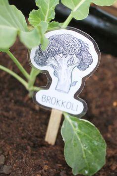 DIY: Dani von Gingered things bastelt aus laminierten Zeichnungen Pflanzstecker für das Hochbeet im Garten. Hier geht's zur Anleitung.