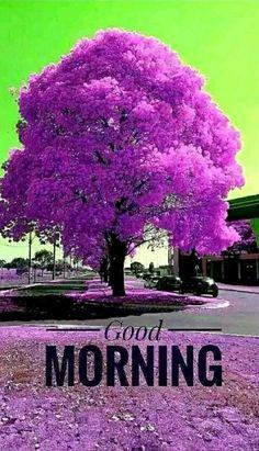Good Morning Thursday, Good Morning Prayer, Good Morning Greetings, Good Morning Good Night, Good Morning Wishes, Happy Morning, Good Night Flowers, Good Morning Images Flowers, Good Morning Images Hd