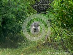 Photo about A view of a Warthog in a rain shower. Image of veld, african, game - 146558414 Elephant Images, Rain Shower, African Animals, Zebras, Free Stock Photos, Giraffe, Wildlife, Illustration, Felt Giraffe