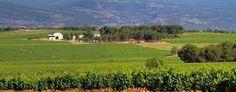 Los Frailes #winery #valenciantuscany #wine
