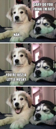 Just a little husky? Check out this list of the best exercises for the Siberian - Funny Husky Meme - Funny Husky Quote - The post Just a little husky? Check out this list of the best exercises for the Siberian appeared first on Gag Dad. Dog Jokes, Funny Animal Jokes, Funny Dog Memes, Cute Funny Animals, Funny Animal Pictures, Funny Images, Cute Dogs, Funniest Memes, Memes Humor