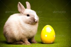 Green background and bunny ...  adorable, animal, animals, baby, bunny, concept, ears, easter, funny, fur, furry, grass, green, happy easter, happycute, hare, holiday, holidays, hopping, little, lop, meadow, nature, pet, pets, rabbit, rabbits, soft, spring, springtime, sweet, young