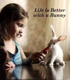 Bunnies make life better. (04/30/14) But a bunny is not a toy! Not suitable for children.