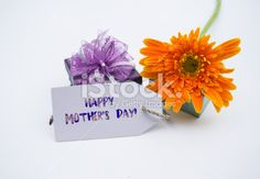 Studio macro of mother's day flowers Royalty Free Stock Photo