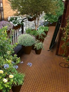 Progettazione terrazzi milano www.marazzigiardini.com