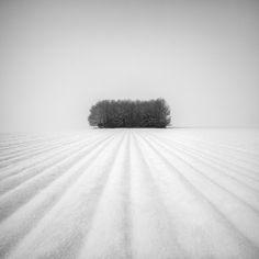 Winter Grove by Martin Rak Photography