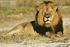 Cecil - cross stitch pattern designed by Tereena Clarke. Category: Lion.