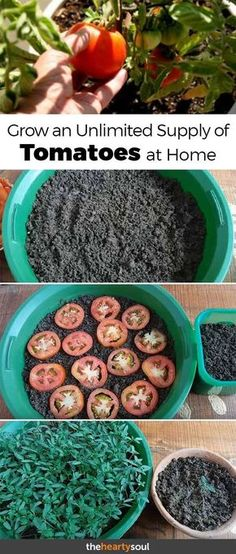 You don't need a green thumb to pull off this super simple gardening hack. You can grow tomatoes at home easily if you know the right tricks - who said a sustainable lifestyle had to be difficult?