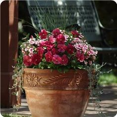 Container Gardening - Combination Cool Berry Punch