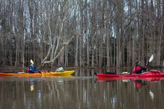 Explore the largest tracts of primeval bottomland forest in the Southeast with these six great destination ideas. Canoe Camping, Canoe And Kayak, Roanoke River, Kayaking, Canoeing, Paddle, North Carolina, Places To Go, Boat
