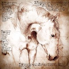 """""""Thoroughbred Face"""" Detail of a Da Vinci style drawing"""