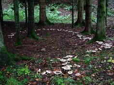 "Fairy Circle  Well, I guess they exist, then"" posted by the artist Tim Waters  ~"