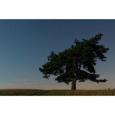"""Zdjęcie z letnich nocnych wypraw z siostrami. Jestem pełna podziwu dla ich cierpliwości gdy o 2 w nocy marudzę: """" Dobra to będzie ostatnie zdjęcie"""". Po czym jeszcze muszę poczekać na 20 kolejnych... #storytellingphotography #nightphoto #stars #photography #dominikakubinska #analog #vscocam #vscopoland #instavsco #tree#yellow #autumn #night #longexpouse #rdzawka"""