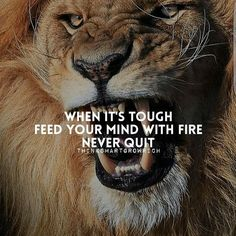Motivational quotes is the best way to motive and inspire you easily. Here is the list of the 50 inspirational and best motivational quotes and sayings. Inspirational Quotes About Success, Motivational Quotes For Success, Positive Quotes, Inspiring Quotes, Inspiring Things, Lion Quotes, Me Quotes, Tiger Quotes, Pride Quotes