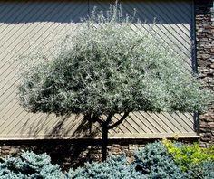 Hardhouten schuttingen gecombineerd met carrara grind tuin inspiratie pinterest - Opslag idee lounge ...