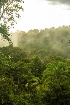 Osa Peninsula jungle in Costa Rica, one of the most biological diverse places in the world.