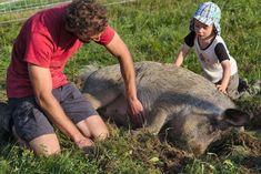 Wir haben eine enge und respektvolle Beziehung zu unseren Tieren. Fish, Sports, Relationship, Animals, Sport