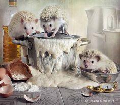 about naughty dough by Elena Eremina - Photo 130303341 - 500px