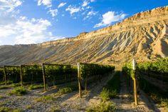 Palisade, Colorado wineries and grapes