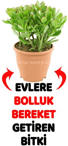 Evinizden s k ld n z i eride bas l yor gibi Plant Breeding, My Flower, Flowers, Do It Yourself Projects, Good To Know, Planer, House Plants, Feng Shui, Succulents
