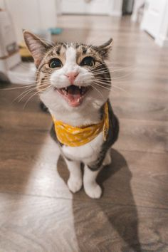 Chats Tabby Oranges, Cute Cats, Funny Cats, Adorable Animals, Orange Tabby Cats, Cat Sleeping, Cat Facts, Weird Facts, Funny Cat Videos
