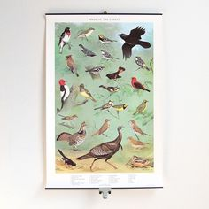 vintage birds of the forest wall chart