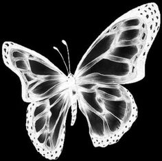 This is a butterfly. My name is Vanessa. And Vanessa means Butterfly:) Photo Wall Collage, Picture Wall, Aesthetic Collage, Cybergoth, Aesthetic Pictures, Aesthetic Wallpapers, Art Inspo, Cover Art, Art Drawings
