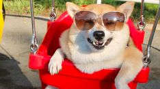 13 Dogs in Swings Who Are Here to Brighten Your Day | CANIDAE® Blog