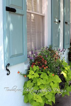 Charleston Home with Flower Box and Light Blue Shutters Photography Print by TomlinsonPhotoDesign, On sale for $5.00 (Matted to 5x7)