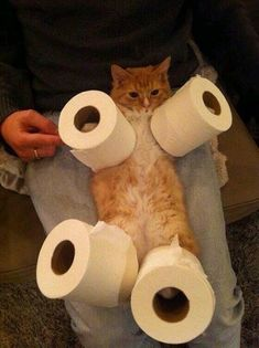 15 Cats That Love To Play With Toilet Paper