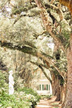 Rosewood plantation | Louisiana