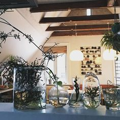 Velkommen til Urban Garden Company Grow Your Own, Glass Vase, Instagram Images, Urban, Table Decorations, Garden, Furniture, Home Decor, Garten